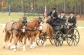 The 14th Annual Katydid Combined Driving Event at Katydid Farm in Windsor, which featured dressage, marathon and cones, concluded Sunday. Proceeds from the Sunday brunch went to benefit the Aiken Land Conservancy. Contestants hailed from Aiken to New Jersey to Colorado. Photo by Michael Smith   Aiken Observer